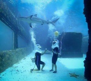 besonderer Verlobungsantrag unter Wasser